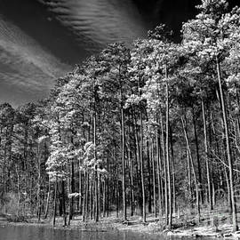 Tom Gari Gallery-Three-Photography - Trees On The Rivers Edge