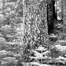 Raphael Bruckner - Trees