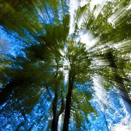 Joslin Hartley - Treetops of Narnia