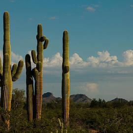 Ed  Cheremet - Tres Saguaros