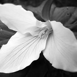 Jennie Marie Schell - Trillium Flower in Black and White