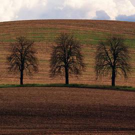 Jaroslaw Blaminsky - Trio