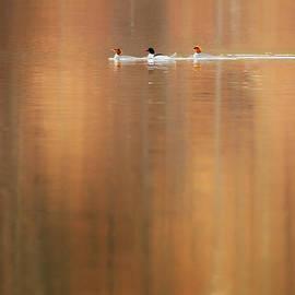 Bill  Wakeley - Trio Reflections