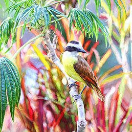 Peggy Collins - Tropical Bird in Colorful Costa Rica