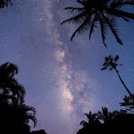Allen Lefever - Tropical Cosmos