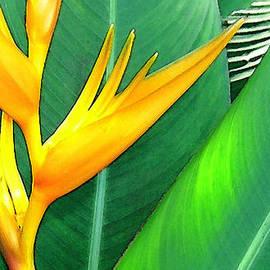 James Temple - Tropical Fingers
