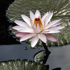 Byron Varvarigos - Tropical Floral Elegance