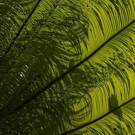 Georgia Mizuleva - Tropical Green Curves and Diagonals - a Vertical View