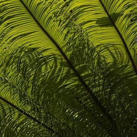 Georgia Mizuleva - Tropical Green Curves and Diagonals