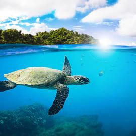 Nicklas Gustafsson - Tropical Paradise