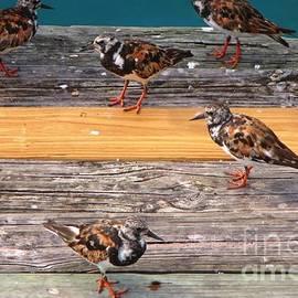 John Malone - Tropical Sparrows