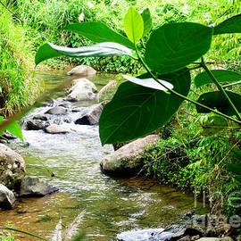 Tina M Wenger - Tropical Stream