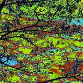 Will Borden - Tropical Swamp