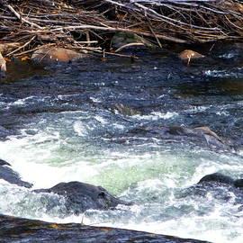 Jackie Carpenter - Trout River