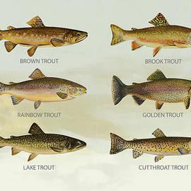 Trout Species