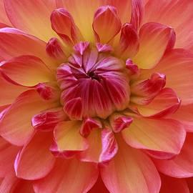 Geri Glavis - True Beauty