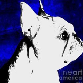 Barbara Chichester - True Blue Frenchie