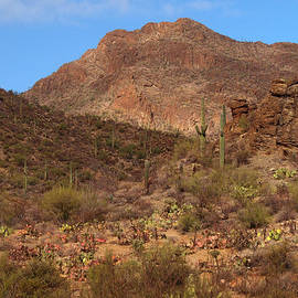 James Peterson - Tucson Mountain Park
