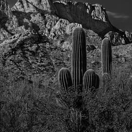 Mark Myhaver - Tucson Topo