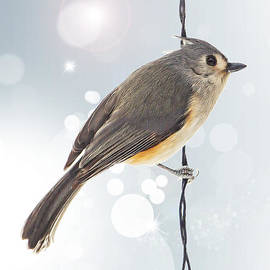 Bill Tiepelman - Tufted Titmouse Twinkle