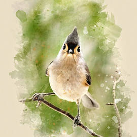 Christina Rollo - Tufted Titmouse - Watercolor Art