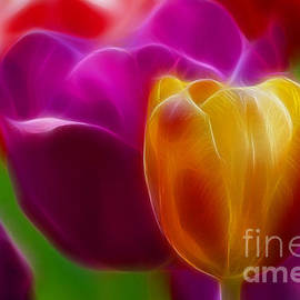 Gary Gingrich Galleries - Tulip-7011-Fractal