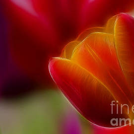 Gary Gingrich Galleries - Tulip-7020-Fractal