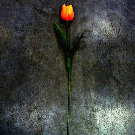 ARTSHOT  - Photographic Art - Tulip