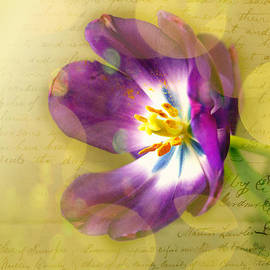 Judi Bagwell - Tulip Bokeh