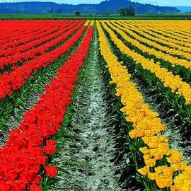 Benjamin Yeager - Tulip Farm