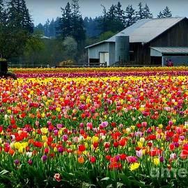 Susan Garren - Tulip Farm