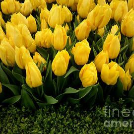 Hanza Turgul - Tulip Festival - 27