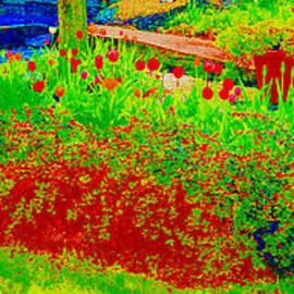 Dan Hilsenrath - tulip garden
