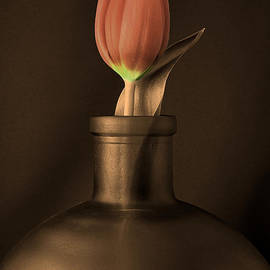 Linda Suffion - Tulip in a Bottle in Sepia