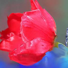 Kume Bryant - Tulip
