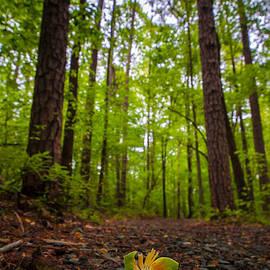 Serge Skiba - Tulip Poplar Forest