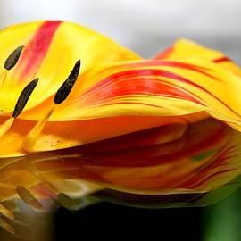 Andrea Lazar - Tulip Reassembled