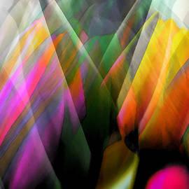 James Chesnick - Tulip Sky