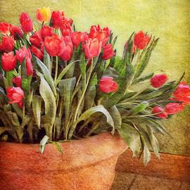 Nikolyn McDonald - Tulip Tumble