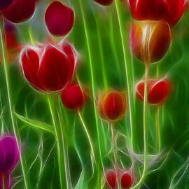 Gary Gingrich Galleries - Tulips-6996-Fractal