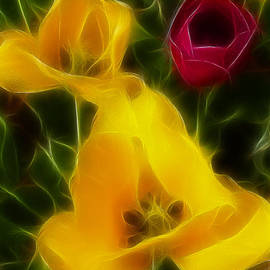 Gary Gingrich Galleries - Tulips-7095-Fractal