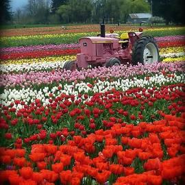 Susan Garren - Tulips Deserve Pink Tractor