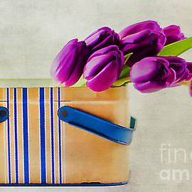 Darren Fisher - Tulips for Mom