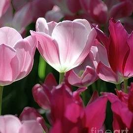 Kathleen Struckle - Tulips For Spring