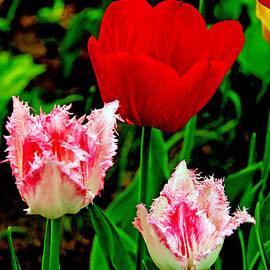 Lali Kacharava - Tulips in France