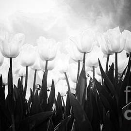 Tina Wentworth - Tulips