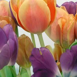 Karen Nicholson - Tulips Up Close