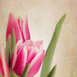 Jane Rix - Tulips vintage