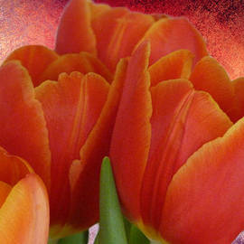 Lynn Bolt - Tulips with a Textured Background