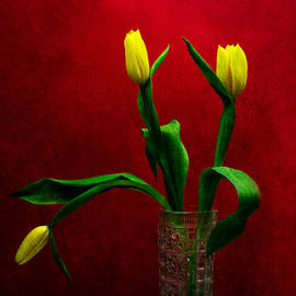 Alexander Senin - Tulips - Yellow on Red